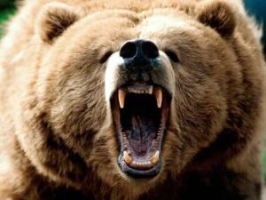 yellowstone-grizzly-bear-attack-fatality
